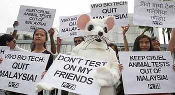 Animal testing on non-human primates