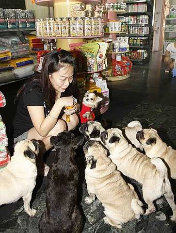 whether malaysians were ready to embrace the concept of insuring pets