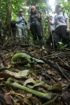 Gruesome remains: Trekkers chance upon a skull, bones and claws of possibly a panther during a