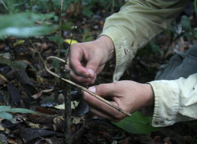 Numerous small snares for trapping small animals like rodents or
